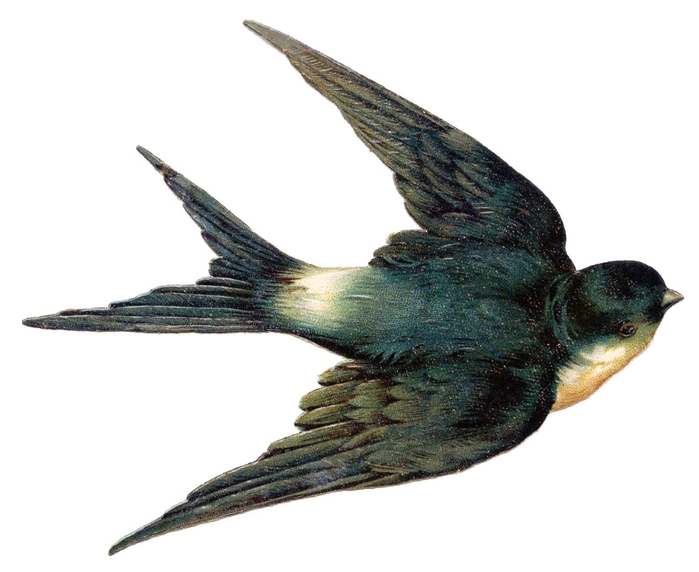 swallow bird vintage image graphicsfairy007d (700x572, 143Kb)