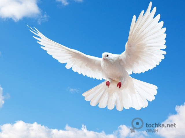 голубьshutterstock-58396333 (640x479, 173Kb)
