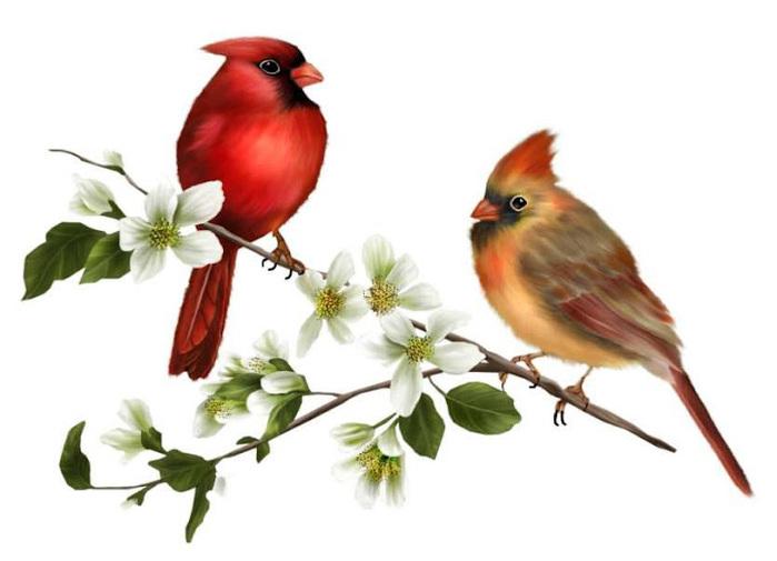 Aves para Decoupage (7) (700x505, 73Kb)