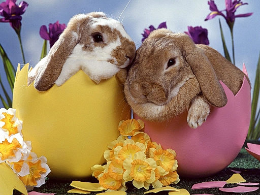 easter-bunny-in-eggs (512x384, 199Kb)