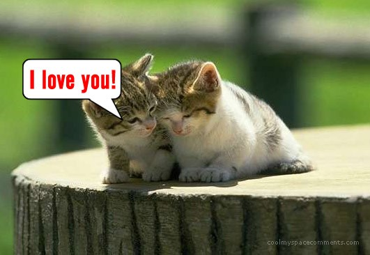 love-cats--Liebe--animale--cat--kittens--animals_large (531x366, 43Kb)