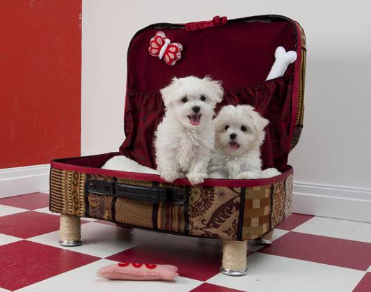 3424885_83872984_large_caminha_cachorro (533x419, 65Kb)