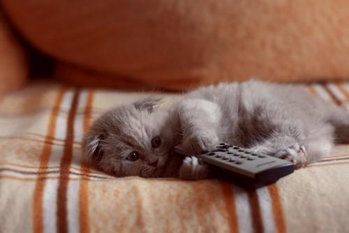 сериалы/1333627616_kitten (500x334, 29Kb)