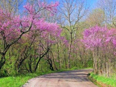 весна (448x336, 62Kb)