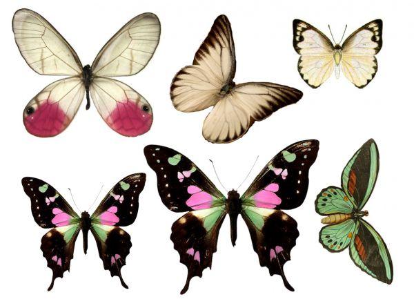 1278426542_177_FT838_butterfly_1_ (600x446, 45Kb)