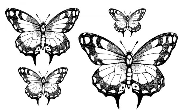 1278471016_55_FT838_winged_friends_butterfly_ (600x375, 52Kb)