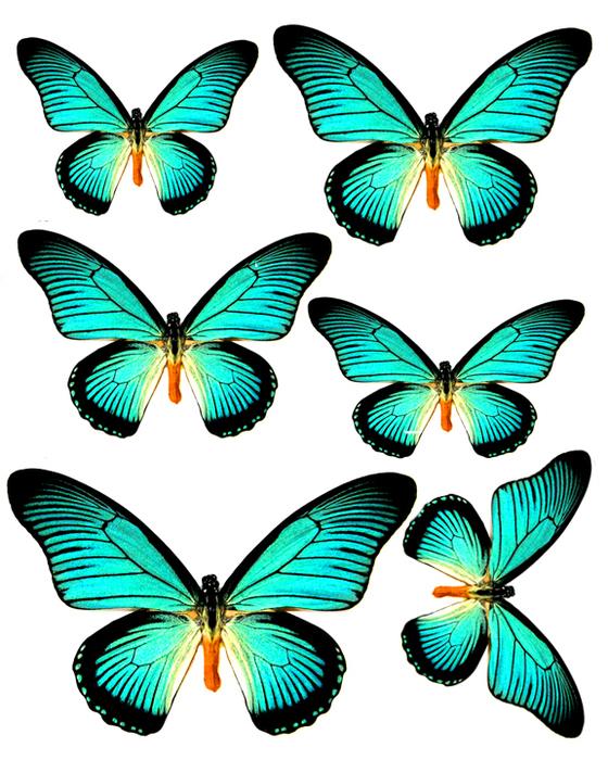 1281140167_55_FT838_aqua_butterflies (560x700, 377Kb)