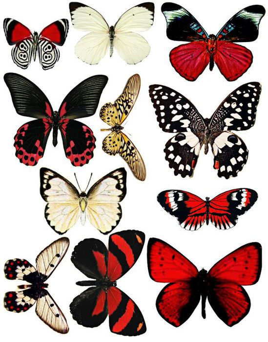 1281316643_55_FT838_september_kit_butterflies_ (549x700, 84Kb)