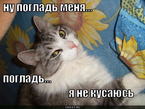 poglad-menya_1276141362 (500x375, 37Kb)