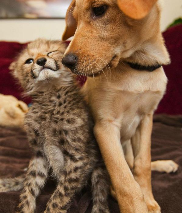дружба животных фото