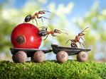 Превью муравьи5 (640x481, 154Kb)