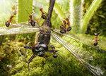 Превью муравьи7 (640x461, 130Kb)