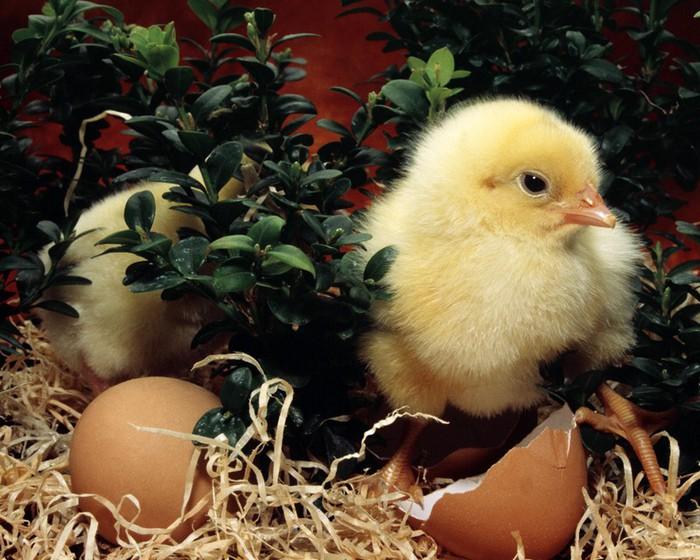 50+ Оригинальные пасхальные яйца 35 (700x560, 119Kb)