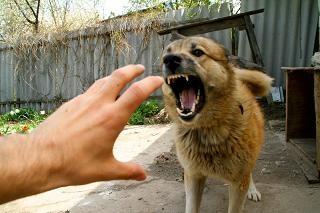 злая собака (320x213, 22Kb)