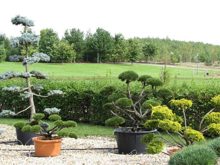 Сад камней Нохтен - Lausitzer Findlingspark Nochten 66725