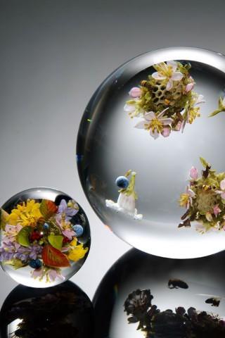 artfoto-cvety-rasteniya-13414 (320x480, 35Kb)