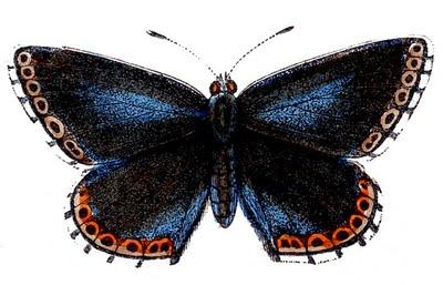 butterflies blue clip art--graphicsfairy007b (400x257, 35Kb)