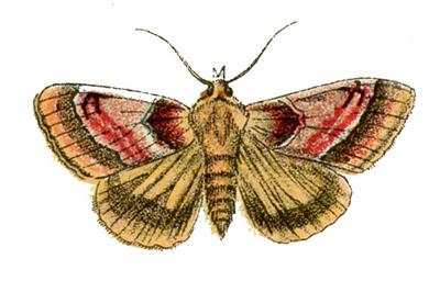 moth vintage image graphicsfairy (400x256, 43Kb)