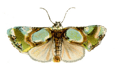 moth vintage image graphicsfairy3 (400x238, 37Kb)