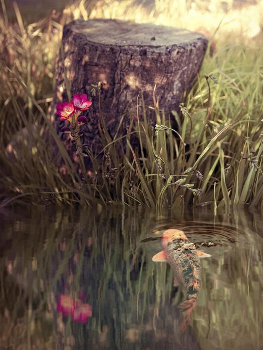 Ванильные фото от Rachel Bellinsky 12 (525x700, 410Kb)