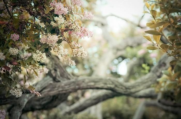 Ванильные фото от Rachel Bellinsky 25 (700x461, 87Kb)