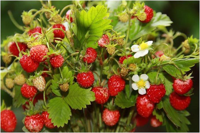 Фрукты ягоды обои на рабочий стол 6