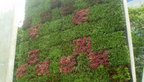 озеленение 6 (500x285, 28Kb)