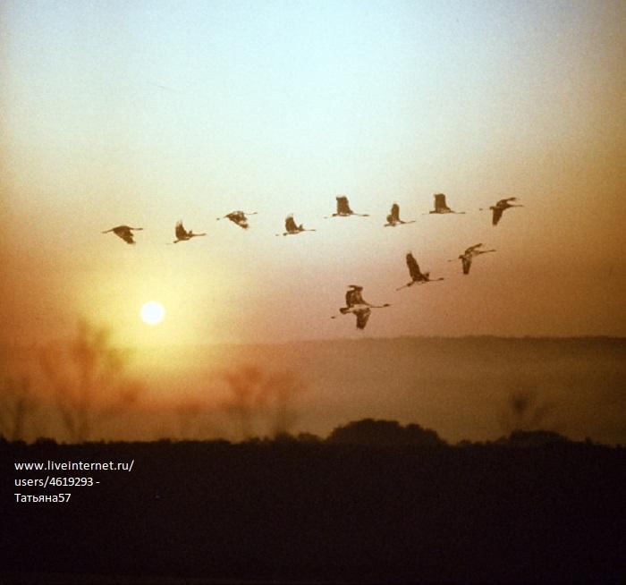 Контролок инструкция к чему снятся стая птиц залетевшая домой любовь про удачу