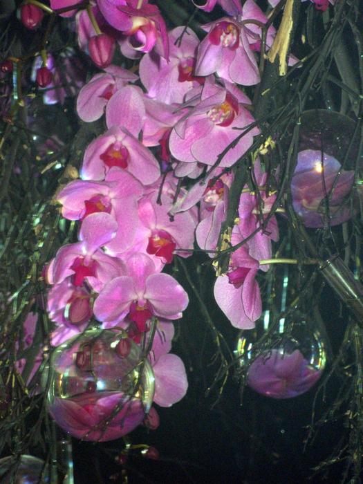 tn_Выставка цветов 076 (525x700, 523Kb)