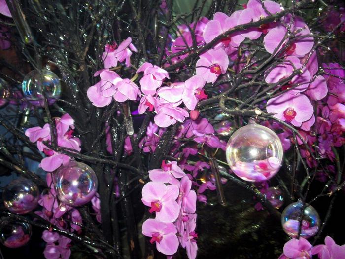 tn_Выставка цветов 082 (700x525, 518Kb)