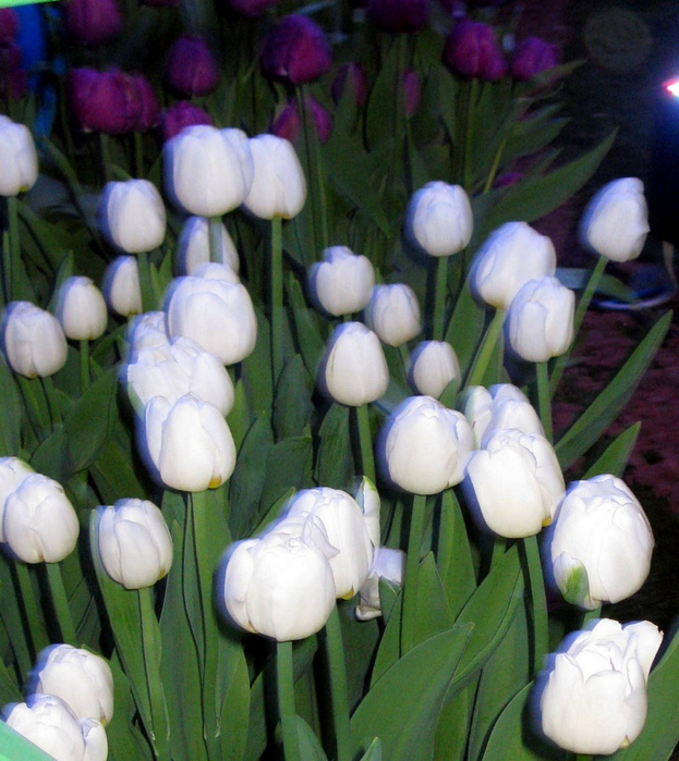 tn_Выставка цветов 089 (623x700, 495Kb)