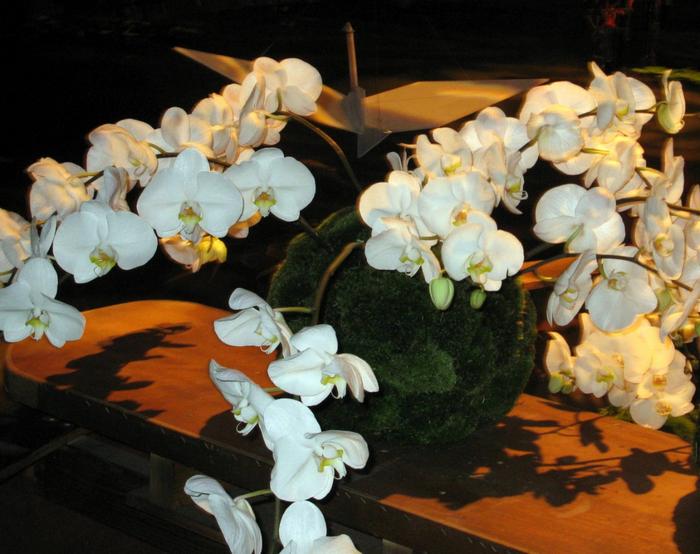 tn_Выставка цветов 120 (700x554, 418Kb)