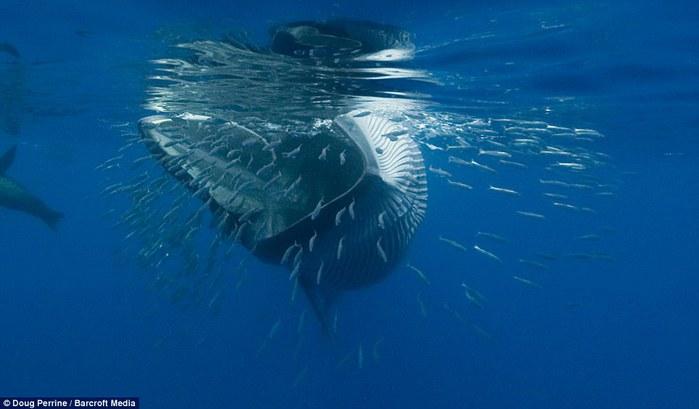 кит фото 2 (700x409, 45Kb)