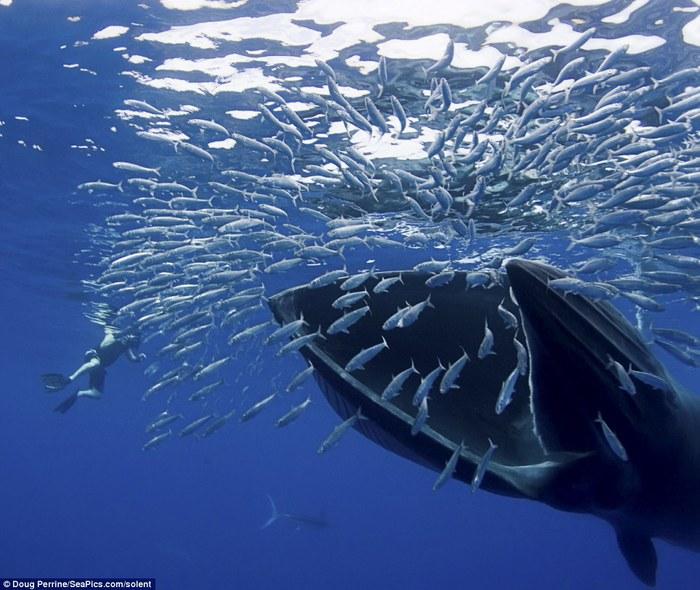 кит фото 3 (700x590, 103Kb)