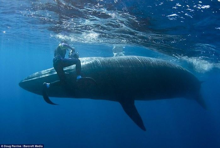 кит фото 4 (700x472, 62Kb)