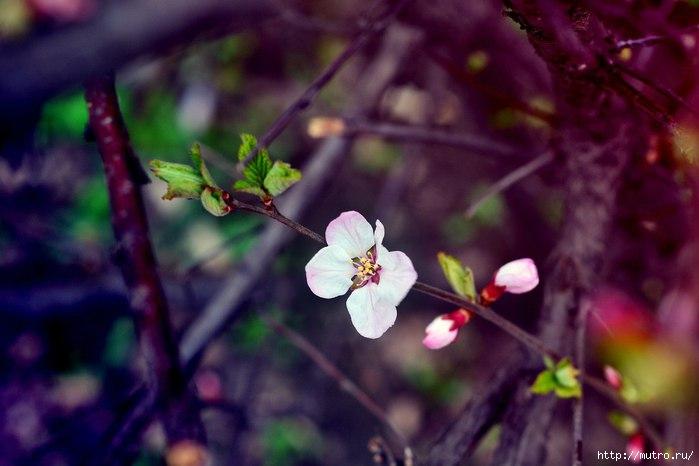 первый цветок весны