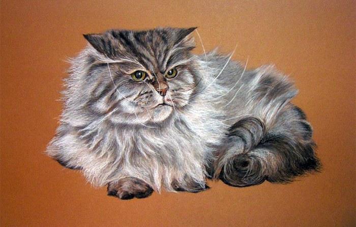 Сердитый котик Пастель (700x448, 86Kb)