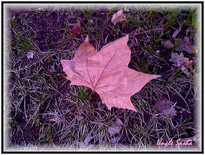 foto-0045.04.12.03.a (654x494, 170Kb)