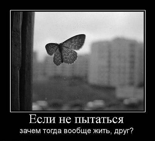 4239794_x_9d0b849a (512x467, 32Kb)