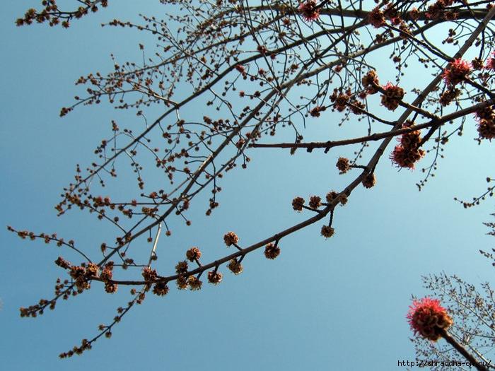 весна 2012_ (700x525, 290Kb)