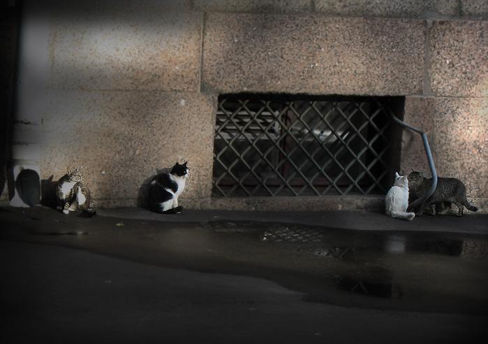 4329935_cats_Herm (700x492, 119Kb)