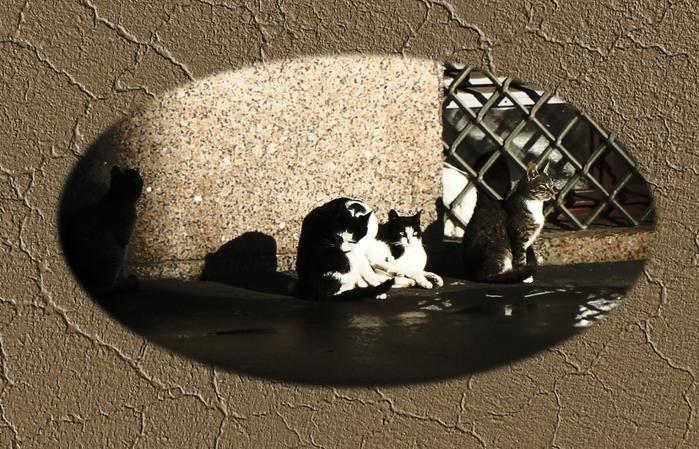 4329935_cats_Herm5_vignette (700x449, 303Kb)