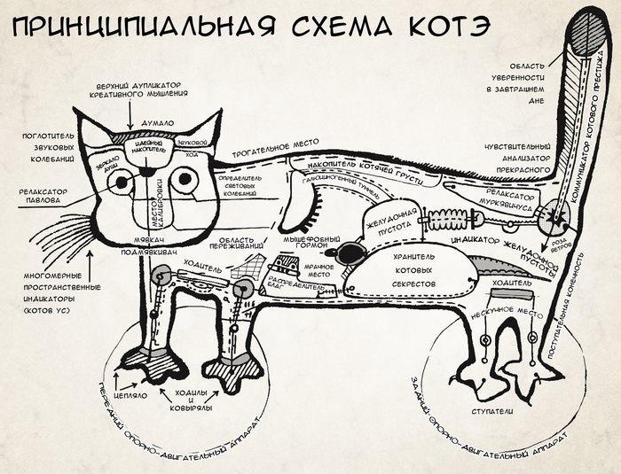Где находится котова