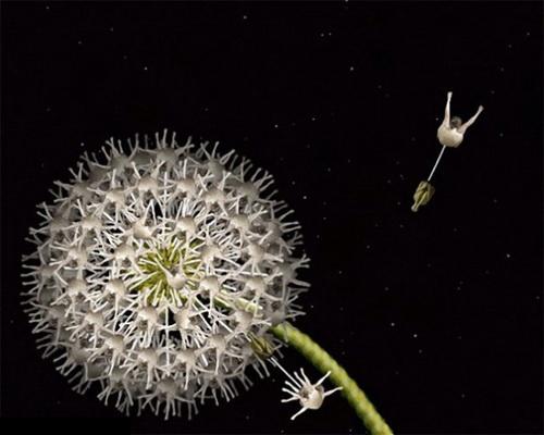 Красивые необычные цветы, красивые необычные фотографии, Сесилия Вебер, цветы из человеческих тел, Cecelia Webber