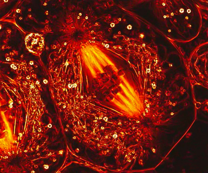 luchshie-raboty-s-fotokonkursa-olympic-bioscapes-03 (700x583, 252Kb)
