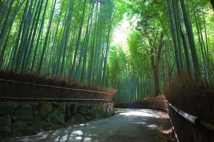 бамбуковая роща фото 2 (700x466, 333Kb)