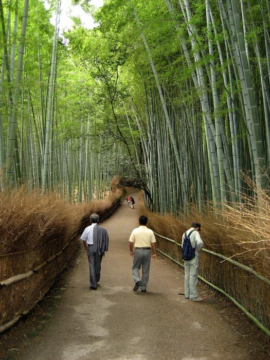 бамбуковая роща фото 4 (525x700, 173Kb)