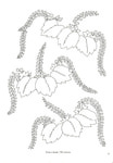 Превью Japanese Floral Patterns and Motifs - 31 (356x512, 45Kb)