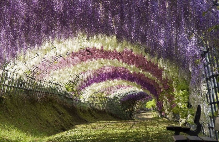 ashikaga-flower-park-4 (700x453, 193Kb)