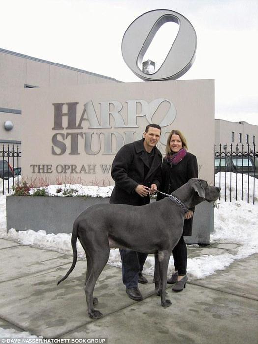 самая большая в мире собака 3 (525x700, 50Kb)